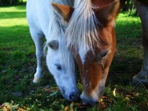 horses-950633_640